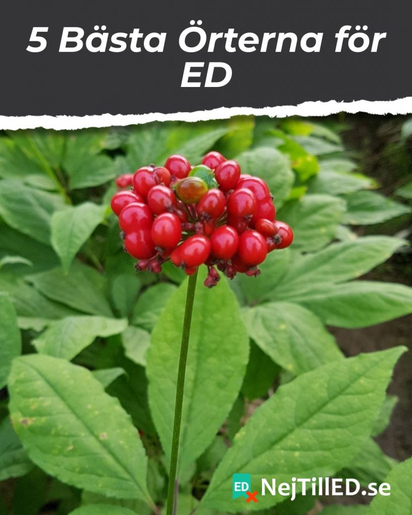 Panax Ginseng för Erektil Dysfunktion